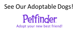 See our adoptable dogs on PetFinder